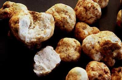 what does white truffle taste like
