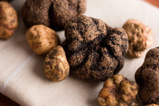what makes a truffle a truffle
