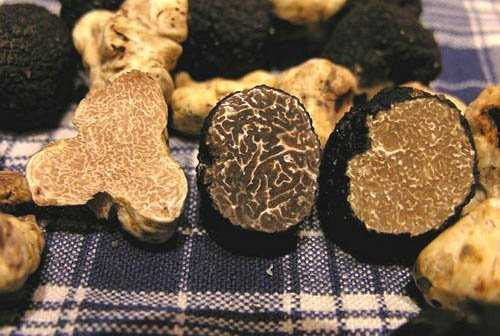 best truffle recipe in the world