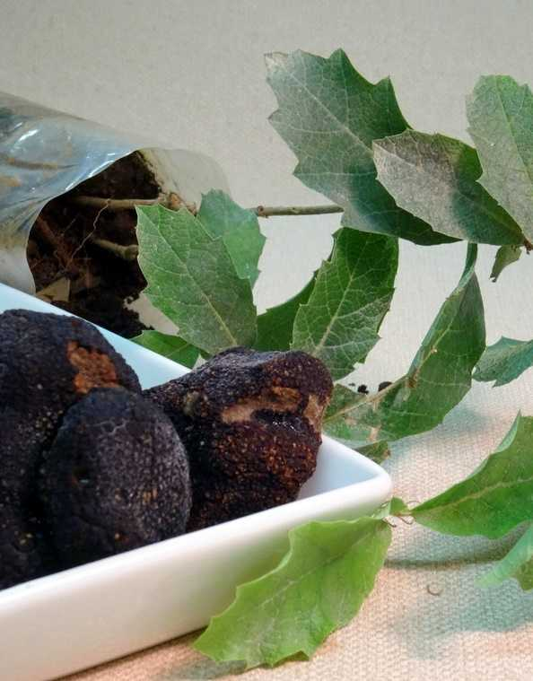 truffles grow under what tree