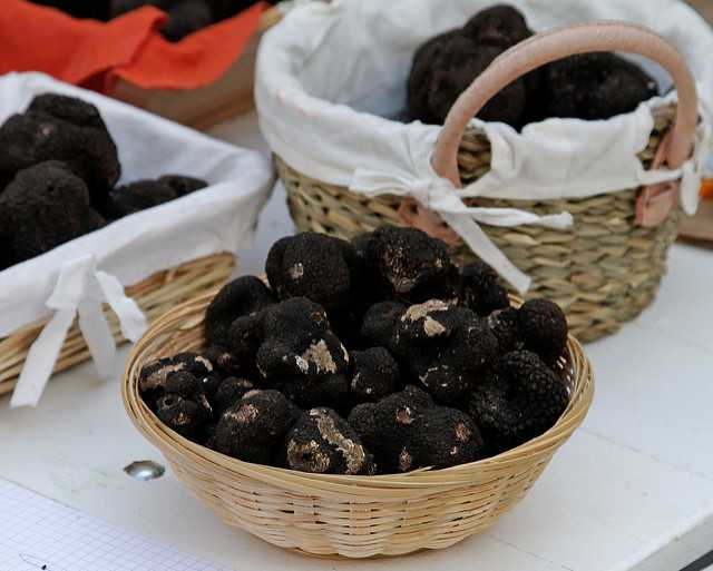 where do black truffles come from